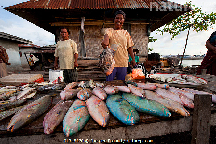 Vendors selling fish in the Wangi Wangi afternoon public market. Wakatobi, Sulawesi, Indonesia, November 2009., ASIA,CORAL TRIANGLE,CULTURES,FISH,GROUPS,HOLDING,INDO PACIFIC,MARKETS,MEN,MIXED SPECIES,OUTDOORS,PEOPLE,SELLERS,SOUTH EAST ASIA,TROPICAL,VILLAGES,,SOUTH-EAST-ASIA,INDONESIA, Jurgen Freund
