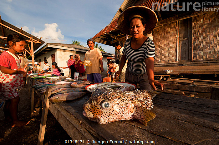 Vendors selling fish (including Pufferfish) in the Wangi Wangi afternoon public market. Wakatobi, Sulawesi, Indonesia, November 2009., CHILDREN,CORAL TRIANGLE,CULTURES,FISH,GROUPS,INDO PACIFIC,MARKETS,MEN,OUTDOORS,PEOPLE,PUFFERFISH,SOUTH EAST ASIA,TRADE,VILLAGES,WOMEN,,SOUTH-EAST-ASIA,Asia,INDONESIA, Jurgen Freund