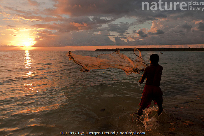 Indonesian fisherman throwing a cast net at a small shoal of fish by the shore. Kei Islands, Moluccas, Indonesia, November 2009, BEACHES,casting,coral triangle,CULTURES,DUSK,FISHING,INDO PACIFIC,ISLANDS,MEN,nets,PEOPLE,shallows,SILHOUETTES,SOUTH EAST ASIA,SUNSET,TROPICAL,WWF,SOUTH-EAST-ASIA,Asia, Jurgen Freund