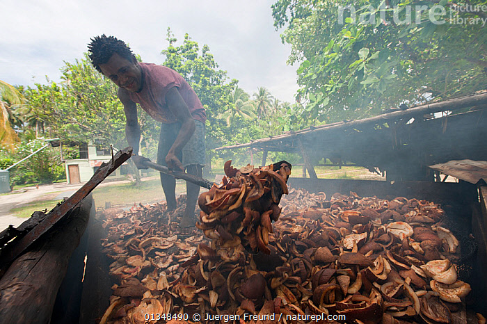 Man smoking and drying copra, the meat of the coconut, in Enuk Village. Kavieng, Papua New Guinea, June 2010., ASIA,COCONUTS,CORAL TRIANGLE,CULTURES,INDO PACIFIC,MEN,PEOPLE,SMOKE,SOUTH EAST ASIA,VILLAGES,WORKING,, Jurgen Freund