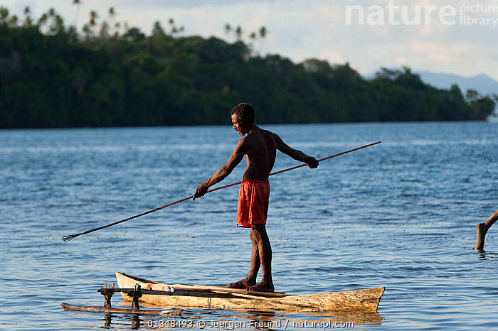 Man spear fishing from his dugout canoe. This is a Marine Protected Area managed by the local community, and fish are abundant. M'buke Island, New Ireland, Papua New Guinea, June 2010, ASIA,BOATS,CANOES,COASTAL WATERS,CORAL TRIANGLE,CULTURES,DUGOUT,DUGOUTS,FISHING,FISHING BOATS,INDO PACIFIC,ISLANDS,MEN,OUTRIGGERS,PEOPLE,PROFILE,SOUTH EAST ASIA,SPEARFISHING,SPEARS,STANDING,TRADITIONAL,TROPICAL,WOODEN,WORKING BOATS,,OPEN-BOATS, Jurgen Freund