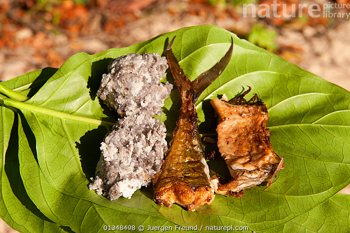A typical lunch of freshly caught fish and sago served on a leaf. New Ireland, Papua New Guinea, June 2010., ASIA,CORAL TRIANGLE,FISH,FOOD,INDO PACIFIC,LEAVES,SOUTH EAST ASIA,TRADITIONAL,, Jurgen Freund