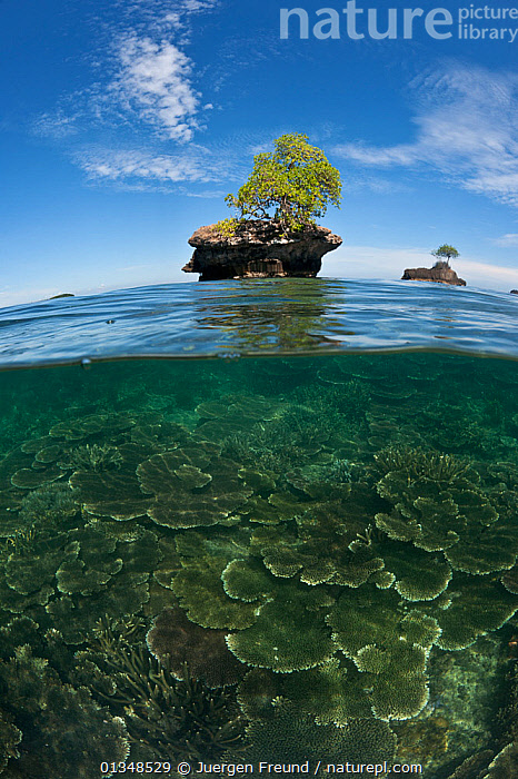 Split level of a small island outcrops with a single tree and coral reefs underwater. Sabah, Malaysia, June 2009., ASIA,COASTAL WATERS,CORAL TRIANGLE,CORAL REEFS,CORALS,INDO PACIFIC,ISLANDS,LANDSCAPES,ROCKS,SOUTH EAST ASIA,SPLIT LEVEL,TREES,TROPICAL,VERTICAL,,SOUTH-EAST-ASIA,PLANTS, Jurgen Freund