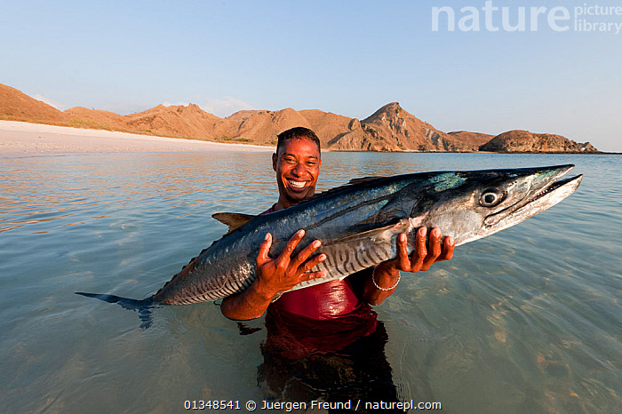 Fisherman carrying a Spanish mackerel (Scomberomorus sp) caught off Komodo Island, Indonesia, August 2009.  ,  CORAL TRIANGLE,FISH,FISHERMAN,FISHING,INDO PACIFIC,LARGE,MACKEREL,MAN,MARINE,OSTEICHTHYES,PEOPLE,SOUTH EAST ASIA,,SOUTH-EAST-ASIA,Asia,SIZE,,NP,Komodo National Park,UNESCO World Heritage Site,  ,  Jurgen Freund