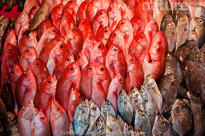 Reef fish for sale in the Manado public market, Sulawesi, Indonesia, October 2009., COLOURFUL,CORAL TRIANGLE,FISH,FISHERIES,GROUPS,INDONESIA,INDO PACIFIC,MARKET,PATTERNS,RED,SOUTH EAST ASIA,TRADE,,SOUTH-EAST-ASIA,Asia, Jurgen Freund