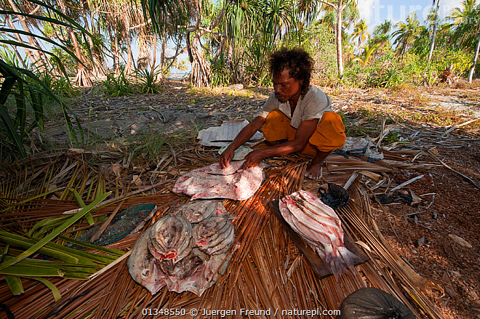 Fisherman cutting and salting his catch of fish to preserve fish for journey back to Runduma from Anano Island, Indonesia, November 2009.  ,  CORAL TRIANGLE,CULTURES,FISH,FISHING,INDO PACIFIC,MAN,PEOPLE,SALT,SOUTH EAST ASIA,,Asia  ,  Jurgen Freund