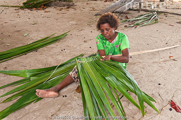 Woman from Enuk Island making her thatched roof. Kavieng, Papua New Guinea, June 2010., ASIA,BEACHES,CORAL TRIANGLE,CULTURES,INDO PACIFIC,LEAVES,PEOPLE,SOUTH EAST ASIA,THATCH,WEAVING,WOMEN,WORKING,, Jurgen Freund