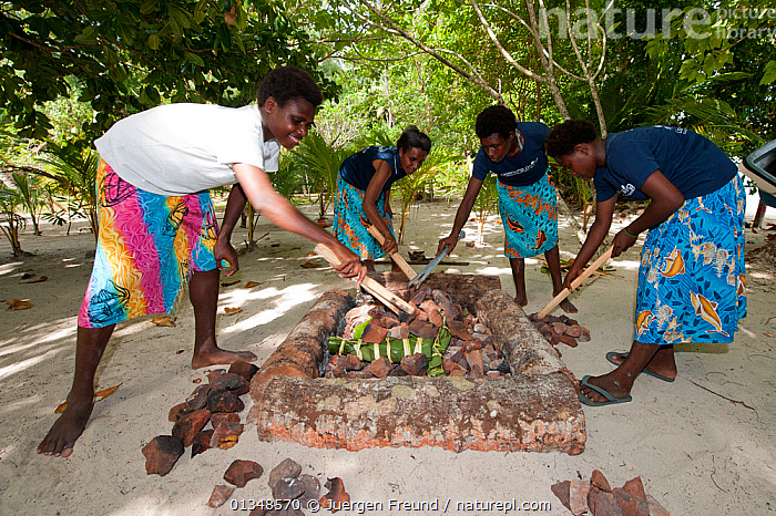 Lissenung Island Resort girls preparing a traditional mumu cooking. Kavieng, Papua New Guinea, June 2010., ASIA,BEACHES,COOKING,CORAL TRIANGLE,CULTURES,FOOD,INDO PACIFIC,PEOPLE,SOUTH EAST ASIA,TREES,WOMEN,,PROCEDURES,PLANTS, Jurgen Freund