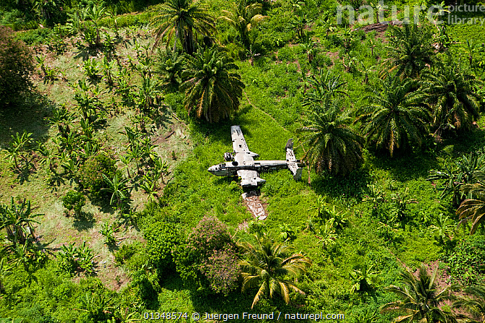 WWII plane wreck in the forest of Kimbe Bay. West New Britain, Papua New Guinea, October 2008., AEROPLANE,AIRCRAFT,ASIA,CORAL TRIANGLE,FORESTS,INDO PACIFIC,LANDSCAPES,SOUTH EAST ASIA,TREES,WOODLANDS,WRECKS,,PLANTS, Jurgen Freund