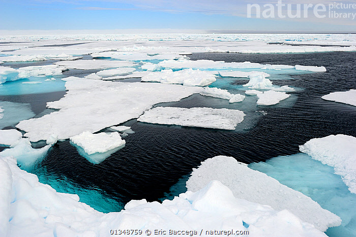 Melting ice at Floe Edge, Arctic Bay, Baffin Island, Nunavut, Canada, June., ARCTIC,CANADA,ICEBERGS,ICESCAPES,LANDSCAPES,NORTH AMERICA,POLAR,SEASCAPES,WATER, Eric Baccega
