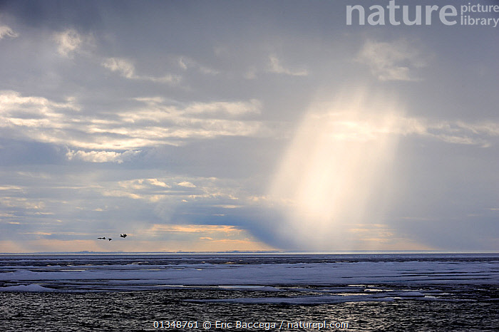 Light rays breaking through clouds above the melting icepack. Foxe Basin, Nunavut, Canada, July 2011.  ,  ARCTIC,CANADA,CLOUDS,ICESCAPES,LANDSCAPES,LIGHT,NORTH AMERICA,POLAR,SEASCAPES,WATER,WEATHER  ,  Eric Baccega