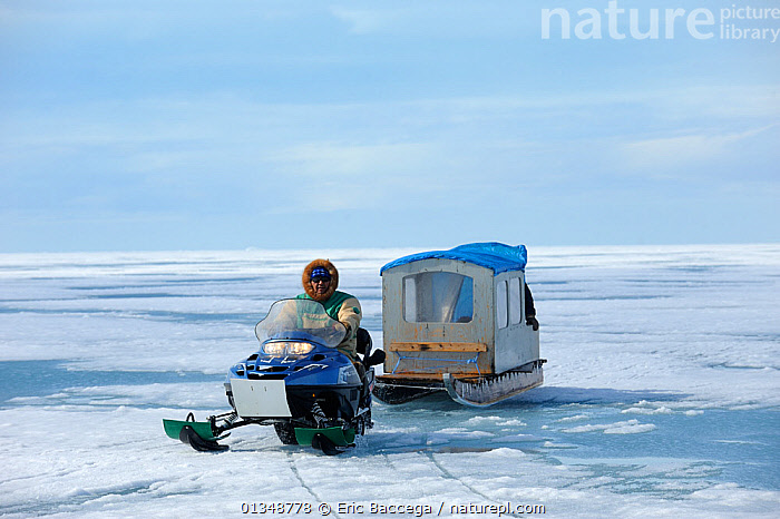 Inuit hunter driving snowmobile with a qamutik (Inuit sledge) on icepack. Arctic Bay, Baffin Island, Nunavut, Canada, June 2011., ARCTIC,CANADA,HUNTERS,ICE,LANDSCAPES,NORTH AMERICA,OUTDOORS,PEOPLE,SKIDOOS,TRIBES,VEHICLES, Eric Baccega