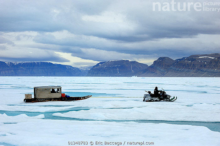 Inuit hunter driving snowmobile with Qamutik (Inuit sledge) on icepack. Arctic Bay, Baffin Island, Nunavut, Canada, June 2011., ARCTIC,CANADA,GLOBAL WARMING,HUNTERS,ICE,LANDSCAPES,MOUNTAINS,NORTH AMERICA,OUTDOORS,PEOPLE,SKIDOOS,TRIBES,VEHICLES, Eric Baccega