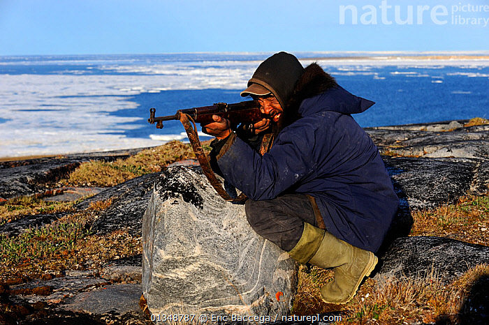 Inuit hunter aiming his gun in an icepack landscape. Igloolik, Foxe Basin, Nunavut, Canada, July 2011., ARCTIC,CANADA,HUNTERS,HUNTING,ICE,LANDSCAPES,NORTH AMERICA,OUTDOORS,PEOPLE,TRIBES, Eric Baccega
