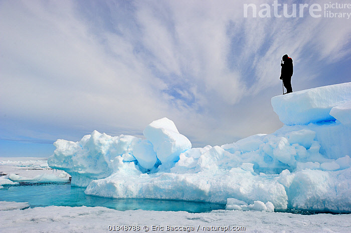 Inuit guide observing melting ice. Floe edge, Arctic Bay, Baffin Island, Nunavut, Canada, June., ARCTIC,CANADA,GLOBAL WARMING,ICE,ICEBERGS,LANDSCAPES,NORTH AMERICA,ONE,OUTDOORS,PEOPLE,TRADITIONAL,TRIBES, Eric Baccega
