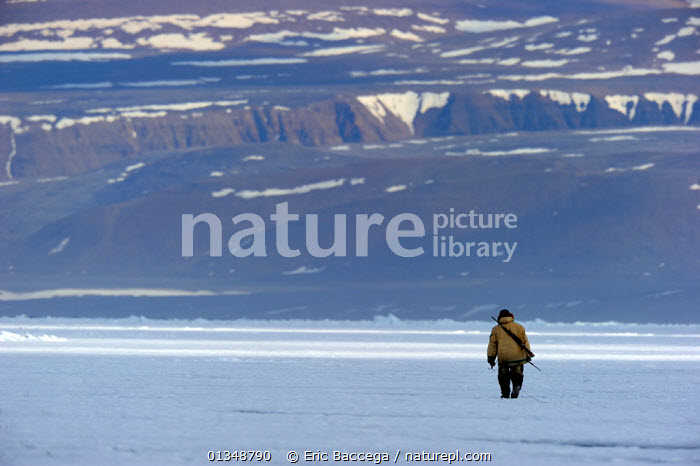 Inuit hunter on icepack. Floe Edge, Arctic Bay, Baffin Island, Nunavut, Canada, April 2009. Model released., ALONE,ARCTIC,Arctic bay,Baffin Island,CANADA,catalogue4,Floe edge,full length,hunter,Hunters,HUNTING,ICE,Icepack,inuit,LANDSCAPES,local people,MAN,mid adult,NORTH AMERICA,Nunavut,one,one person,outdoors,PEOPLE,rear view,remote,solitary,TRADITIONAL,TRIBES,WALKING, Eric Baccega