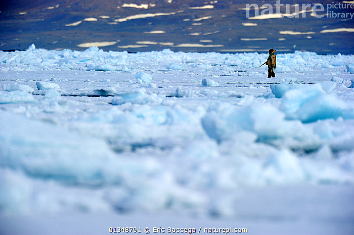 Inuit hunter on icepack. Floe Edge, Arctic Bay, Baffin Island, Nunavut, Canada, June., ARCTIC,CANADA,HUNTERS,HUNTING,ICE,LANDSCAPES,NORTH AMERICA,ONE,OUTDOORS,PEOPLE,TRIBES, Eric Baccega