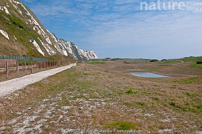 Samphire Hoe Nature Reserve, created from spoil dug from the Channel Tunnel. Home to Early Spider Orchids. Dover, Kent, UK, April.  ,  CLIFFS,COASTS,ENVIRONMENTAL,EUROPE,HABITAT,LANDSCAPES,MEADOWLAND,UK,Geology,ENGLAND,Grassland,United Kingdom  ,  Adrian Davies