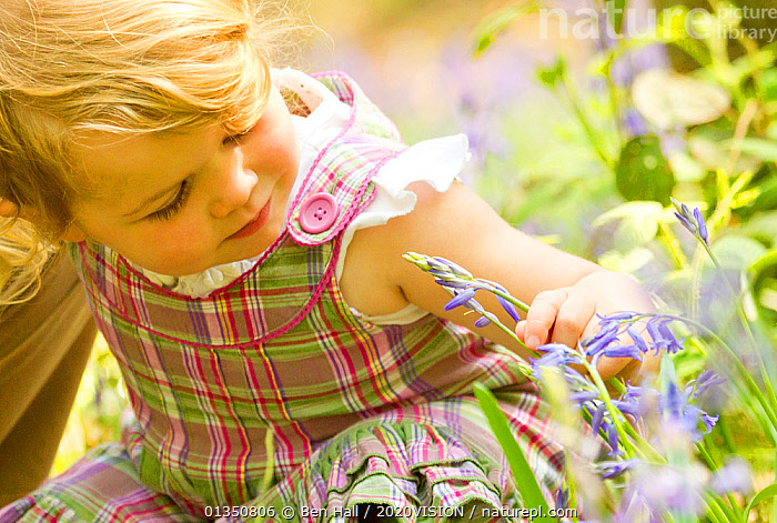 Young girl looking at bluebell flower, The National Forest, Midlands, April 2011, Model released. Did you know? The National Forest is a pioneering project in the heart of the Midlands. Each year more than 35,000 children take part in forest-related education.  ,  2020VISION,bha_02_04212011481   crop,bluebells,Caucasian,child,child nature,CHILDREN,CUTE,ENJOYMENT,EUROPE,fascination,FLOWERS,FORESTS,girl,nature,picday,SPRING,The National Forest,Toddler,UK,WOODLANDS,YOUNG,United Kingdom,2020cc  ,  Ben Hall / 2020VISION