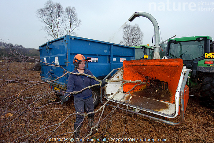 RSPB reserves staff removing birch trees from heathland and chipping waste for recycling, at Minsmere nature reserve, Suffolk, UK. February 2011.  ,  2020VISION,ACID,BETULA,CGO_04_210211_0232,CONSERVATION,ENGLAND,EUROPE,HABITAT MANAGEMENT,HEATHLAND,HEATHS,LOWLAND,MACHINERY,OUTDOORS,PEOPLE,RECYCLING,RESERVE,SANDLINGS,SHREDDING,SUFFOLK,TRACTOR,UK,WORKING,United Kingdom,2020cc  ,  Chris Gomersall / 2020VISION