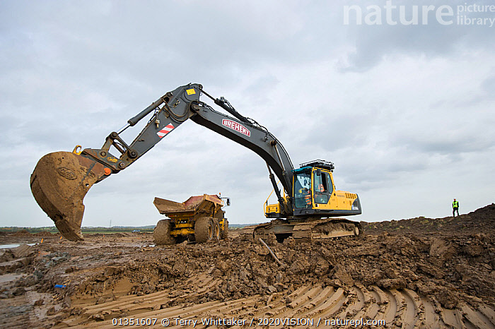 Heavy earth excavator removes clay for future replacement with topsoil. Machine operator Alan Deval. Wetland habitat ecosytem creation for the RSPB by Breheny Civil Engineers at Bowers Marsh RSPB Reserve, Thames Estuary, Essex, UK. November 2011.  Model released  ,  2020VISION,COASTS,CONSERVATION,ENGLAND,ENVIRONMENTAL,EUROPE,GREATER THAMES FUTURESCAPES,HABITAT,HABITAT CREATION,LANDSCAPES,MACHINERY,MAN,MEN,MUD,MUDDY,PEOPLE,RESERVE,TWH_021110_0030,UK,URBAN,WETLANDS,WORKING,United Kingdom  ,  Terry Whittaker / 2020VISION