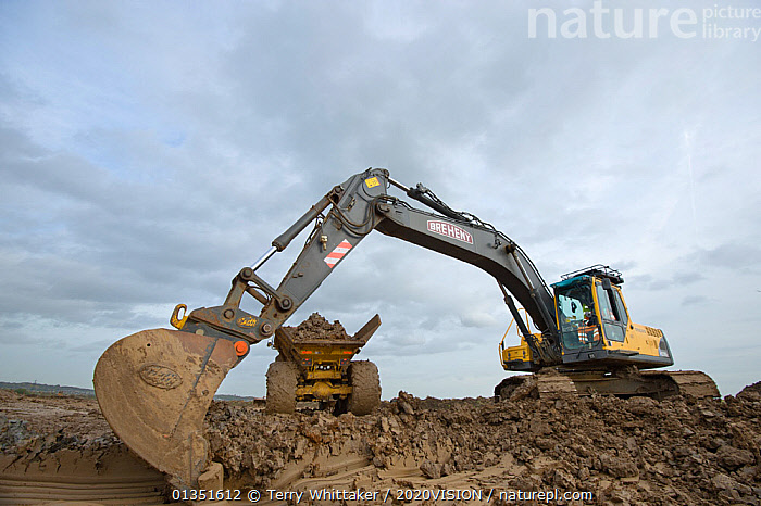 Heavy earth excavator removes clay for future replacement with topsoil. Wetland habitat ecosytem creation for the RSPB by Breheny Civil Engineers at Bowers Marsh RSPB Reserve, Thames Estuary, Essex, UK. November 2011.  Machine operator Alan Deval. Model released  ,  2020VISION,COASTS,CONSERVATION,ENGLAND,ENVIRONMENTAL,EUROPE,GREATER THAMES FUTURESCAPES,HABITAT,HABITAT CREATION,LANDSCAPES,MACHINERY,MAN,MEN,MUD,MUDDY,PEOPLE,RESERVE,TWH_021110_0062,UK,URBAN,WETLANDS,WORKING,United Kingdom  ,  Terry Whittaker / 2020VISION