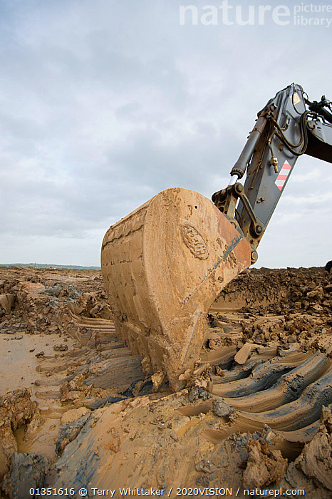 Heavy earth excavator removes clay for future replacement with topsoil. Wetland habitat ecosytem creation for the RSPB by Breheny Civil Engineers at Bowers Marsh RSPB Reserve, Thames Estuary, Essex, UK. November 2011. Machine operator Alan Deval. Model released  ,  2020VISION,COASTS,CONSERVATION,ENGLAND,ENVIRONMENTAL,EUROPE,GREATER THAMES FUTURESCAPES,HABITAT,HABITAT CREATION,LANDSCAPES,MACHINERY,MUD,MUDDY,RESERVE,TWH_021110_0076,UK,URBAN,VERTICAL,WETLANDS,WORKING,United Kingdom  ,  Terry Whittaker / 2020VISION