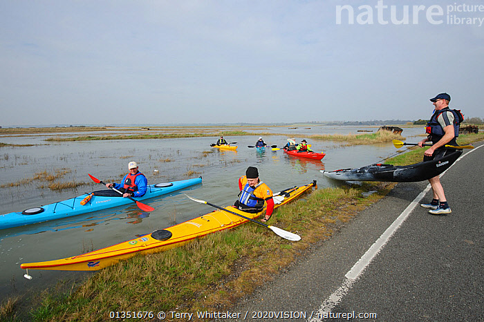 Carrying kayaks across Wallasea Causeway at high tide during a Kayak event to canoe around Wallasea Island organised by the RSPB and Burnham-on-Sea Yacht Club. Essex, UK, January 2011  ,  2020VISION,BOATS,CANOES,COASTS,ENGLAND,EUROPE,GROUPS,KAYAKING,KAYAKS,LANDSCAPES,LEISURE,PEOPLE,RESERVE,ROADS,SALTMARSHES,TWH_200311_0040,UK,URBAN,WATER,WETLANDS,OPEN-BOATS,SPORTS,WATERSPORTS,United Kingdom  ,  Terry Whittaker / 2020VISION