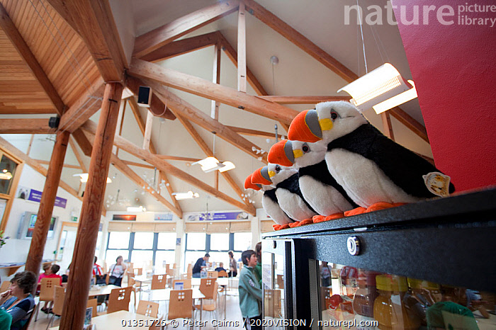 Souvenirs and cafe inside the Scottish Seabird Centre in North Berwick showing economic benefits of presence of Bass Rock, Firth of Forth, Scotland, UK, July 2010  ,  2020VISION,BASS,BERWICK,BIRDS,CAUCASIAN,COASTS,ECOTOURISM,EUROPE,FIRTH OF FORTH,INDOORS,NORTH SEA,PCA_12_180111_19,PUFFIN,PUFFINS,SCOTLAND,SEABIRDS,SEAS,TOURISM,TRADE,UK,URBAN,WILDLIFE,WILDLIFE WATCHING,United Kingdom  ,  Peter Cairns / 2020VISION