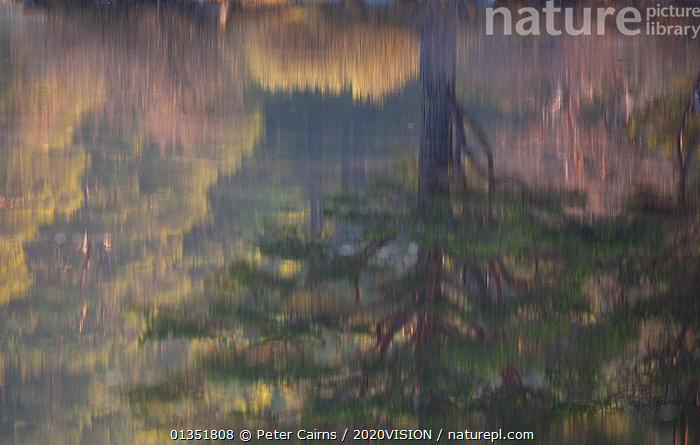 Native woodland reflected in Loch Vaa at dawn, spring, Cairngorms National Park, Highlands, Scotland, UK, April 2011  ,  2020VISION,BETULA,BIRCH,CALEDONIAN PINEWOODS,DAWN,EUROPE,FORESTS,HIGHLANDS,LAKES,LANDSCAPES,PCA_14_170511_15,PEACEFUL,PINE,PINUS,REFLECTIONS,SCOTLAND,SPRING,TREES,UK,WATER,PLANTS,United Kingdom  ,  Peter Cairns / 2020VISION