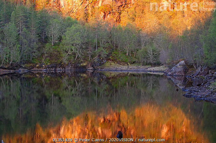 Dawn reflections in Loch Beinn a� Mheadhoin, Glen Affric, Wester Ross, Highlands, Scotland, UK, April 2011  ,  2020VISION,ATMOSPHERIC,BIRCH,CALEDONIAN PINEWOODS,DAWN,EUROPE,FORESTS,LAKES,LANDSCAPES,PCA_14_170511_59,REFLECTIONS,RESERVE,SCOTLAND,SPRING,TREES,UK,WATER,PLANTS,United Kingdom  ,  Peter Cairns / 2020VISION