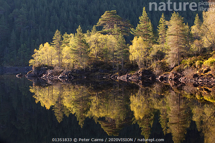 Dawn reflections in Loch Beinn a� Mheadhoin, Glen Affric, Wester Ross, Highlands, Scotland, UK, May 2011. 2020VISION Exhibition. 2020VISION Book Plate.  ,  2020VISION,2020vision book plate,2020vision exhibition,ATMOSPHERIC,Birch,caledonian pinewoods,DAWN,EUROPE,exhibition,FORESTS,LAKES,LANDSCAPES,pca_14_170511_87,REFLECTIONS,RESERVE,SCOTLAND,SPRING,TREES,UK,WATER,PLANTS,United Kingdom,2020cc  ,  Peter Cairns / 2020VISION