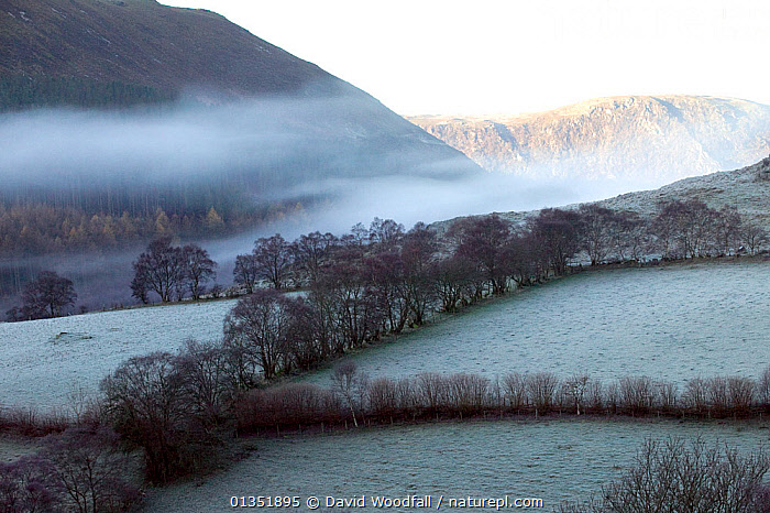 Gilfach Farm SSSI fields and hedges in frost and mist. Marteg valley, Cambrian mountains, Radnorshire Wildlife Trust, Wales, UK, November 2010.  ,  COLD,EUROPE,FARMLAND,FIELDS,FROST,LANDSCAPES,MIST,MOUNTAINS,PASTURE,RESERVE,SSSI,UK,WALES,Weather,United Kingdom  ,  David Woodfall