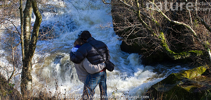 Rear view of couple watching leaping salmon. River Marteg SSSI, Gilfach farm nature reserve, Radnorshire Wildlife Trust, November.  ,  COUPLE,EUROPE,MALE FEMALE PAIR,MAN,NATURE,OUTDOORS,PEOPLE,RESERVE,RIVER,SSSI,STREAM,TWO,UK,WALES,WATER,WATERFALLS,WOMAN,United Kingdom  ,  David Woodfall