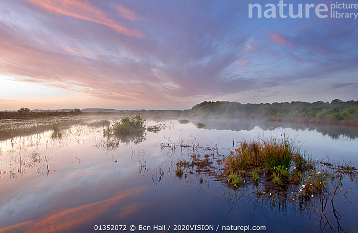 Ballynahone Bog at dawn with steam rising off the water surface, County Londonderry, Northern Ireland, UK, June 2011  ,  2020VISION,BOGS,DAWN,EUROPE,IRELAND,LANDSCAPES,RESERVE,SUNRISE,UK,WATER,WETLANDS,United Kingdom  ,  Ben Hall / 2020VISION