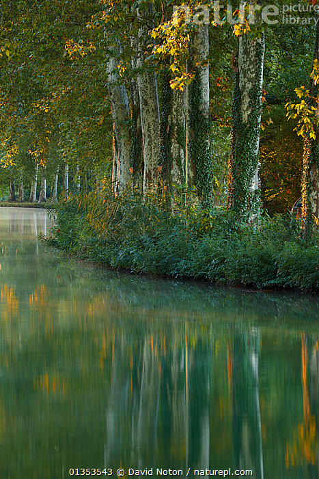 The Canal du Midi at dawn. Castelnaudary, Aude, Languedoc-Roussillon, France, July 2010.  ,  Aude,CALM,Canal du Midi,CANALS,Castelnaudary,catalogue4,COUNTRYSIDE,DAWN,EUROPE,FRANCE,LANDSCAPES,Languedoc Rousillon,nature,Nobody,PEACEFUL,river,Riverbank,RIVERS,Scenic,sunlight,TREES,VERTICAL,WATER,woodland,PLANTS  ,  David Noton