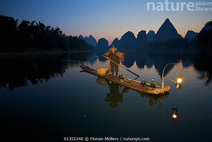 Chinese Fisherman on his raft with Great Cormorant (Phalacrocorax carbo sinensis), against the karst hills at the Li River. Yangshuo, Guangxi, China, November., ASIA,Balance,BIRDS,catalogue4,CHINA,Chinese ethnicity,CORMORANTS,DUSK,Fisherman,FISHING,full length,guangxi,hill,karst,LANDSCAPES,lantern,Li River,limestone karst,lit lamp,lit up,local industry,local people,MAN,mid adult,MOUNTAINS,NIGHT,one man only,one person,outdoors,PEOPLE,Phalacrocoracidae,raft,reflection,REFLECTIONS,river,SEABIRDS,solitary,STANDING,TRADITIONAL,VERTEBRATES,WATER,WORKING,Yangshuo, Florian Möllers