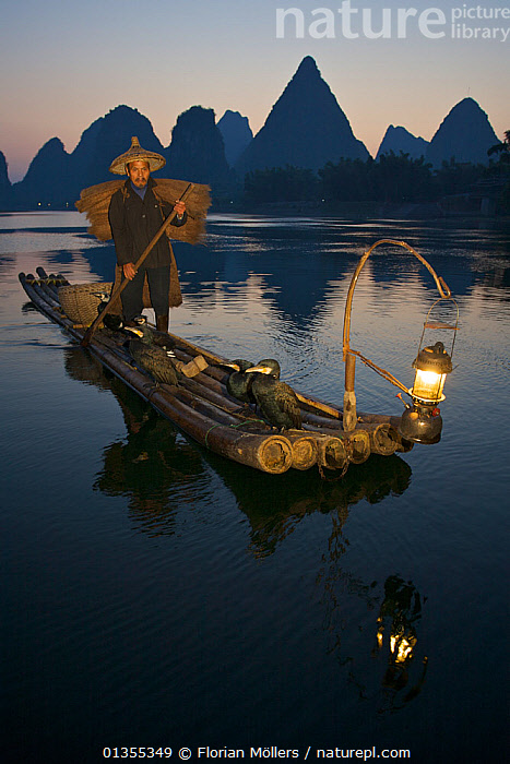 Chinese Fisherman on his raft with Great Cormorant (Phalacrocorax carbo sinensis), against the karst hills at the Li River. Yangshuo, Guangxi, China, November.  ,  ASIA,BIRDS,CHINA,CORMORANTS,DUSK,FISHING,GUANGXI,LANDSCAPES,MOUNTAINS,OUTDOORS,PEOPLE,PHALACROCORACIDAE,REFLECTIONS,SEABIRDS,TRADITIONAL,VERTEBRATES,VERTICAL,WATER,WORKING  ,  Florian Möllers
