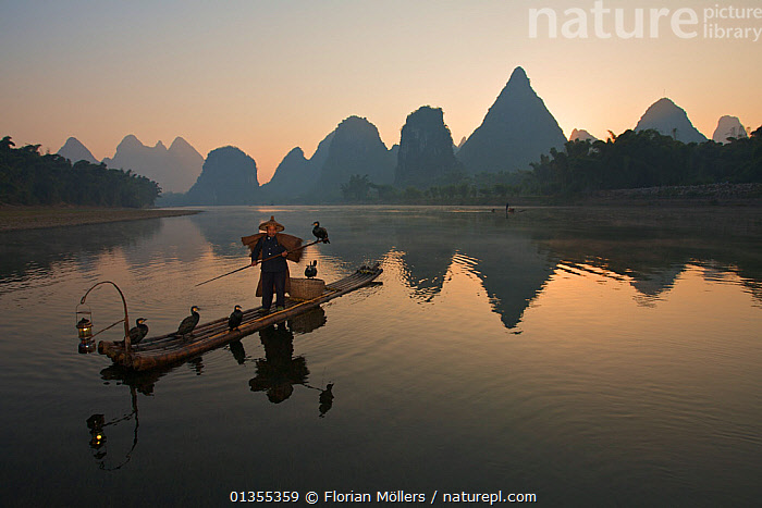 Chinese fisherman on his raft with Great Cormorant (Phalacrocorax carbo sinensis), silhouetted against the karst hills at the Li River. Yangshuo, Guangxi, China, November.  ,  animal theme,ASIA,ATMOSPHERIC,Balance,CALM,catalogue4,CHINA,Chinese ethnicity,companionship,DUSK,Evening,Fisherman,FISHING,five animals,full length,GROUPS,guangxi,INTERACTION,karst,LANDSCAPES,Li River,limestone karst,local industry,local people,MAN,medium group of animals,mid adult,MOUNTAINS,one man only,one person,outdoors,PEOPLE,raft,reflection,REFLECTIONS,river,solitary,STANDING,TRADITIONAL,WATER,WORKING,Yangshuo  ,  Florian Möllers