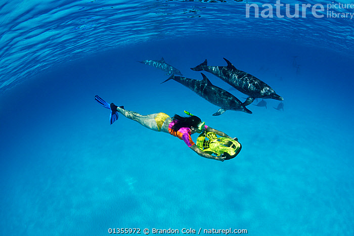 Atlantic Spotted Dolphins (Stenella frontalis) swimming beside a woman riding an underwater scooter. Bahamas, Atlantic Ocean, July.  ,  ATLANTIC OCEAN,BAHAMAS,CETACEANS,DIVING,DOLPHINS,MAMMALS,MARINE,PEOPLE,TROPICAL,UNDERWATER,VERTEBRATES,WATER PURSUITS  ,  Brandon Cole