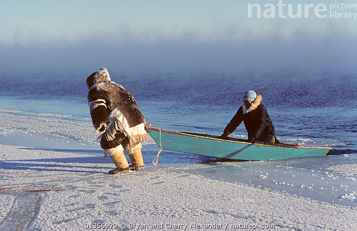 Inuit hunters hauling boat out of the water after seal hunting at the floe edge in frost smoke. Igloolik, Nunavut, Canada, 1990. 40 BELOW bookplate., ARCTIC,BOATS,CANADA,CLOTHING,DRAGGING,FORTY BELOW BOOK,HUNTING FOOD,ICE,MEN,NORTH AMERICA,OPEN BOATS,PEOPLE,POLAR,SEA ICE,SNOW,TRADITIONAL,TRIBES,WOODEN, Bryan and Cherry Alexander