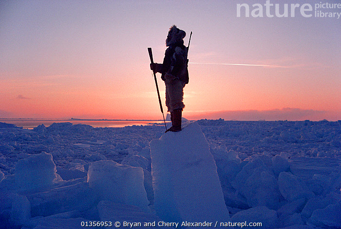 Inuit hunter Jens Danielsen scanning ice of Melville Bay for Polar bears. Northwest Greenland, 1986. 40 BELOW bookplate.  ,  ARCTIC,ATMOSPHERIC,EUROPE,FORTY BELOW BOOK,HARPOON,HARPOONS,HUNTING FOOD,ICE,ICEBERGS,LANDSCAPES,MAN,PEOPLE,POLAR,SEA ICE,SILHOUETTES,SNOW,TRIBES  ,  Bryan and Cherry Alexander