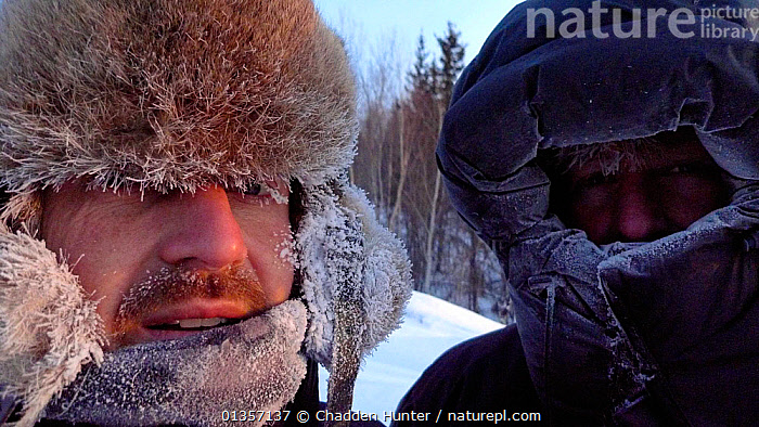 Cameraman Jeff Turner and Producer Chadden Hunter exposed at -40 degrees in Arctic circle in Northern Canada while filming wolves and bison hunting sequence. Taken on location for BBC Frozen Planet series, 2009, ARCTIC,Arctic circle,cameraman,CANADA,catalogue4,CLOTHING,COLD,FACES,freezing,Frozen,hats,head and shoulders,HEADS,hooded,looking at camera,MEN,mid adult,NHU,north america,Northern Canada,PEOPLE,POLAR,SNOW,STANDING,two people,WINTER, Chadden Hunter