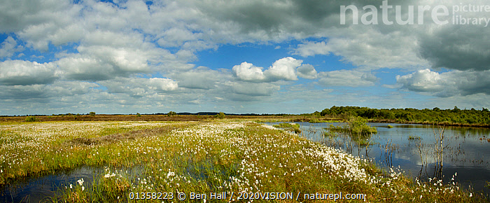 Panoramic view of Ballynahone Bog at dawn,  County Antrim, Northern Ireland, UK, June 2011  ,  2020VISION,BOGS,COTTON GRASS,EUROPE,HABITAT,IRELAND,LANDSCAPES,NORTHERN IRELAND,PANORAMIC,PEATLAND RESTORATION,PEATLANDS,RESERVE,UK,ULSTER,WATER,WETLANDS,United Kingdom,2020cc  ,  Ben Hall / 2020VISION