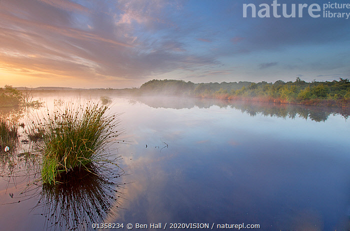 Ballynahone Bog at dawn, County Antrim, Northern Ireland, UK, June 2011  ,  2020VISION,ATMOSPHERIC,BOGS,DAWN,EUROPE,IRELAND,LANDSCAPES,NORTHERN IRELAND,PEATLAND RESTORATION,PEATLANDS,REFLECTIONS,RESERVE,UK,ULSTER,WATER,WETLANDS,United Kingdom,2020cc  ,  Ben Hall / 2020VISION