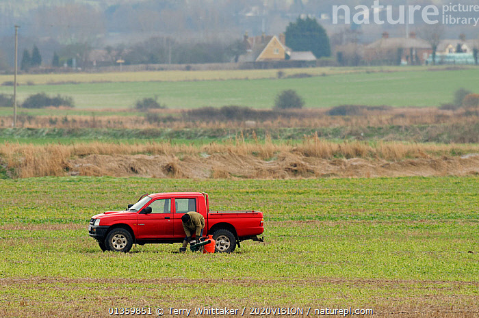 Farmer setting gas banger to scare Dark-bellied brent goose (Branta bernicla) off his crops. South Swale, Kent, UK, December 2010, 2020VISION,ANATIDAE,BIRDS,COASTS,ENGLAND,EUROPE,FARMLAND,GEESE,GREATER THAMES FUTURESCAPES,LANDSCAPES,MAN,PEST CONTROL,RED,UK,URBAN,VEHICLES,VERTEBRATES,WATERFOWL,WETLANDS,United Kingdom, Terry Whittaker / 2020VISION