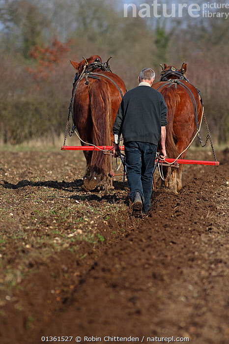 Traditional Horse ploughing, Gressenhall, Norfolk, UK, March 2010  ,  CULTURES,ENGLAND,EUROPE,FARMING,FIELDS,HORSES,LIVESTOCK,MAMMALS,PEOPLE,PLOUGH,TRADITIONAL,UK,VERTICAL,United Kingdom  ,  Robin Chittenden