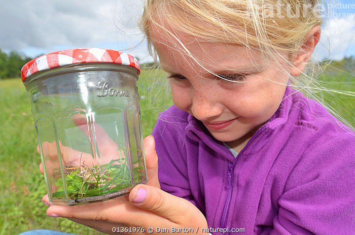 Child in garden collecting insects in jam jar. France, Europe, August. Model released.  ,  blonde hair,captive animal,catalogue4,Caucasian,Childhood,CHILDREN,curiosity,Curious,EDUCATION,EUROPE,FRANCE,girl,holding,insect,INSECTS,INTERACTION,jam jar,LEARNING,nature,one animal,one girl only,one person,outdoors,PEOPLE,SMILING,STANDING,trapped,YOUNG,Invertebrates  ,  Dan Burton