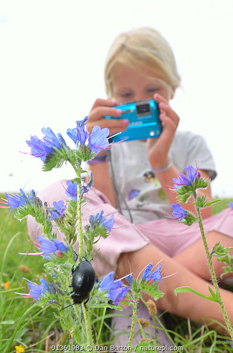 Child in garden photographing flowers and insects. France, Europe, August. Model released.  ,  CHILDREN,CURIOSITY,CURIOUS,EDUCATION,EUROPE,FLOWERS,FRANCE,INSECTS,LEARNING,OUTDOORS,PEOPLE,PHOTOGRAPHY,TAKING PHOTOS,VERTICAL,YOUNG,Invertebrates  ,  Dan Burton