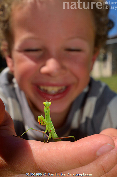 Child with a Praying Mantis (Mantodea) on hand. France, Europe, August. Model released.  ,  CHILDREN,CURIOSITY,CURIOUS,EDUCATION,EUROPE,FLOWERS,FRANCE,INSECTS,LEARNING,NATURE,OUTDOORS,PEOPLE,PHOTOGRAPHY,SMILING,VERTICAL,WILDLIFE,YOUNG,Invertebrates  ,  Dan Burton